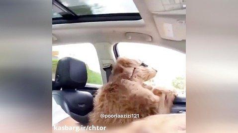 صداگذاری خیلی خنده دار روی حیوانات