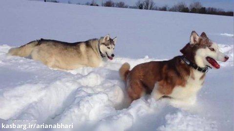 نجات دادن یک سگ از رودخانه برفی