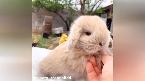 بچه خرگوش های بامزه