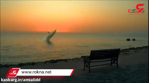 پریدن نهنگ در سواحل بوشهر
